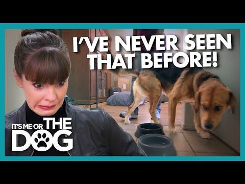 Dog's Bizarre Food Guarding Behavior Surprises Victoria | It's Me or The Dog