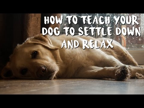 How to Train Your Dog to Settle Down and Relax