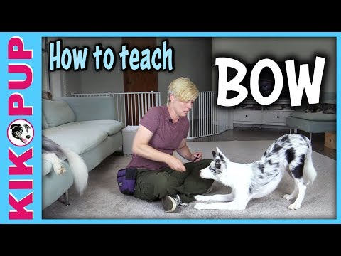 How to teach BOW - Dog Tricks tutorial