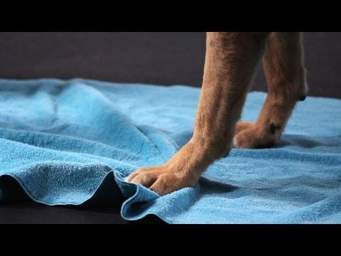 Teach Your Dog to Wipe His Feet, Part 1 | Dog Tricks