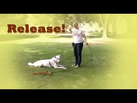 How to train a RELEASE CUE - down stay training! down stay fun!