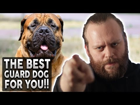What's the BEST Guard Dog Breed FOR YOU!