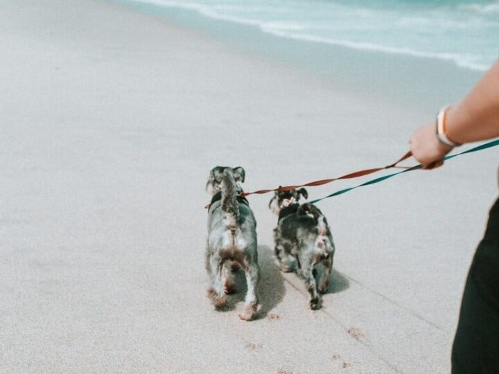how to leash train your puppy