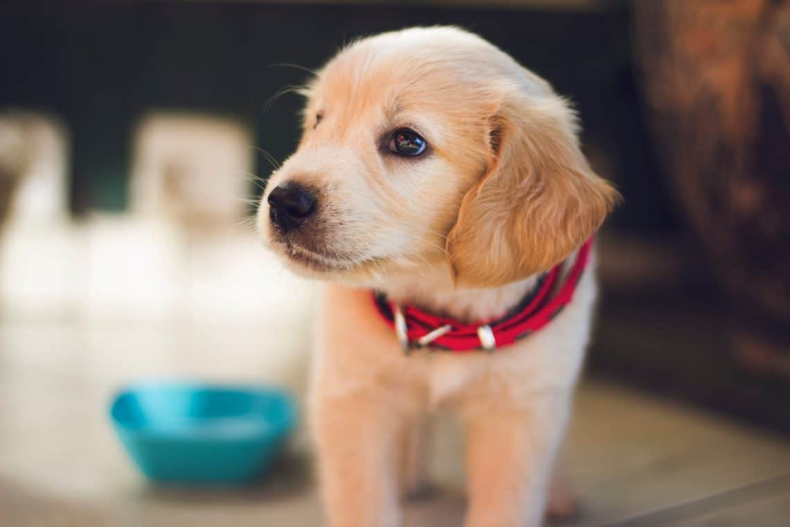 How to Survive Your Puppy's First Night at Home | PawLeaks