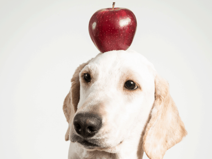 Dog with an apple on his head