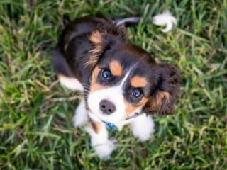 how to stop puppy howling and barking