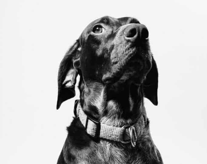 Black dog looking up