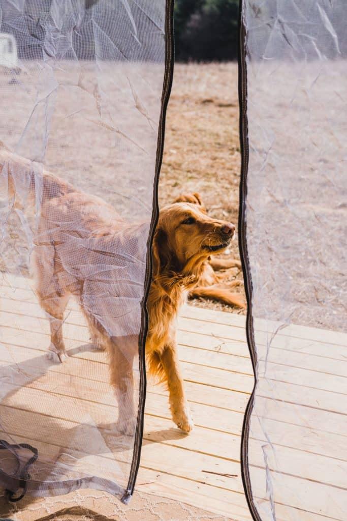 Dog walking on porch