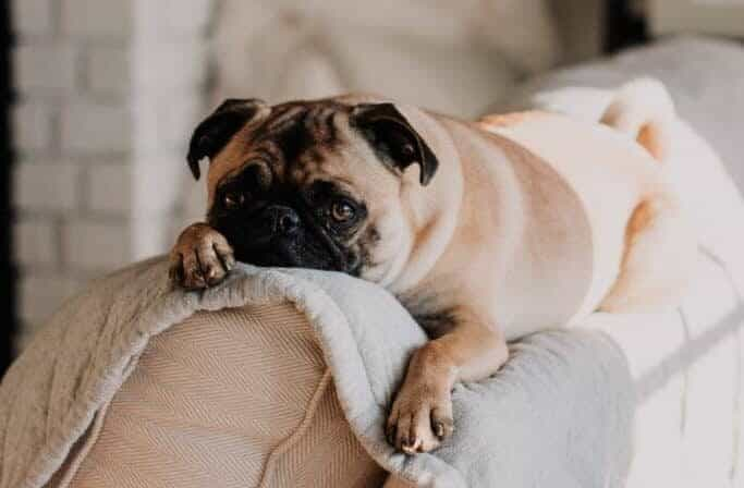 8 alarming signs your dog may be sick