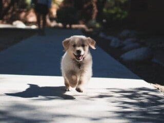 How to socialize your puppy