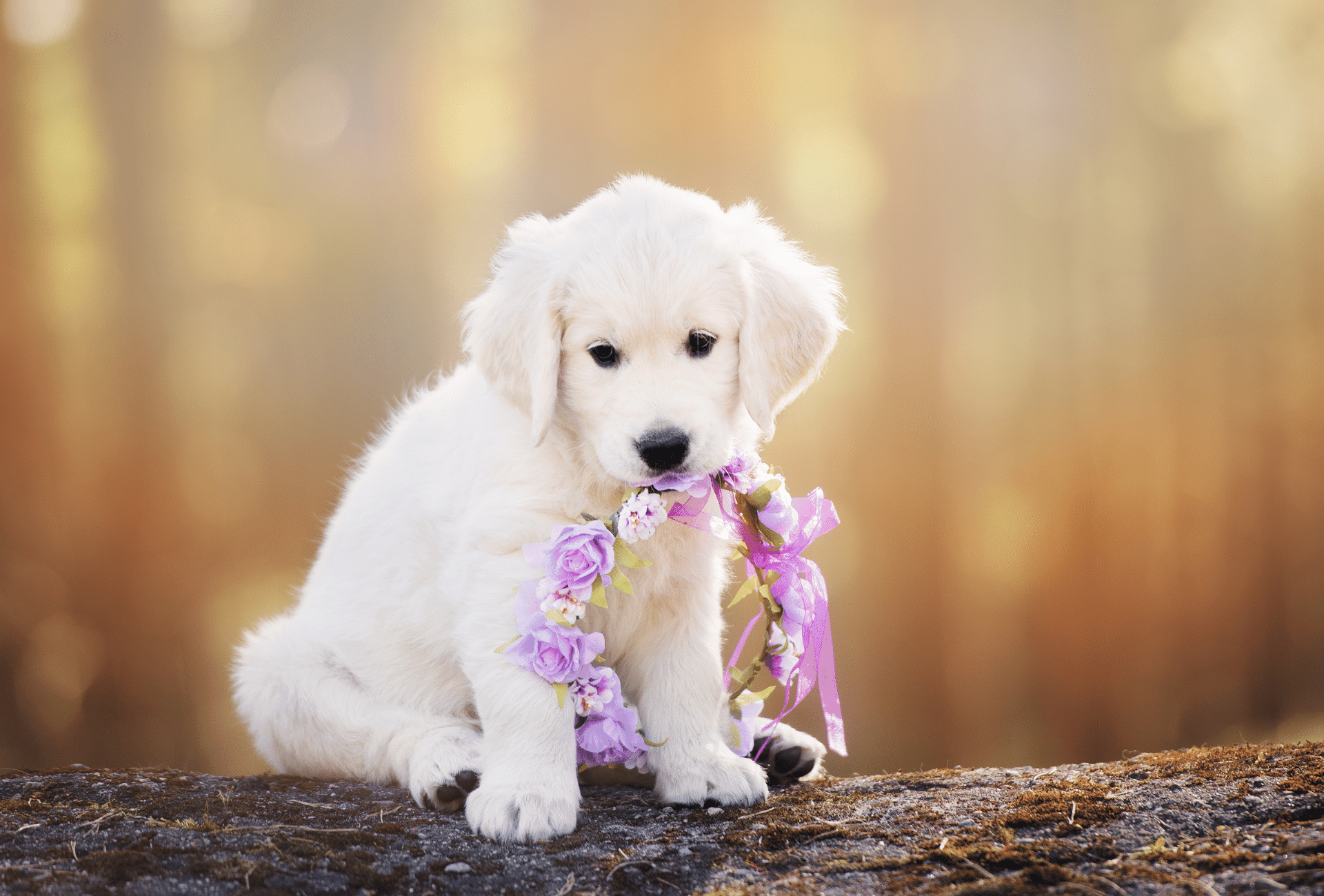 cute puppy holding flower crone