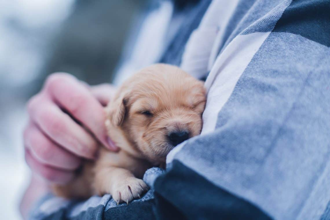Boy holding a cute puppy on his arm
