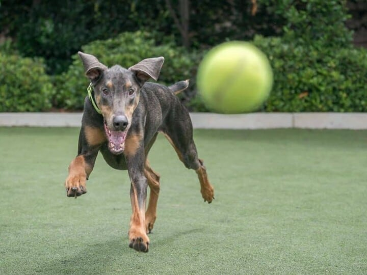 12 Boredom Busters to Keep Your Dog Entertained in the Yard