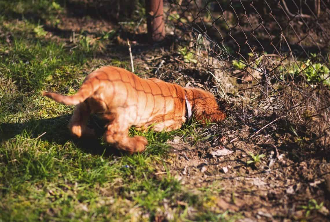 Solutions to Stop Your Dog from Digging Under the Fence