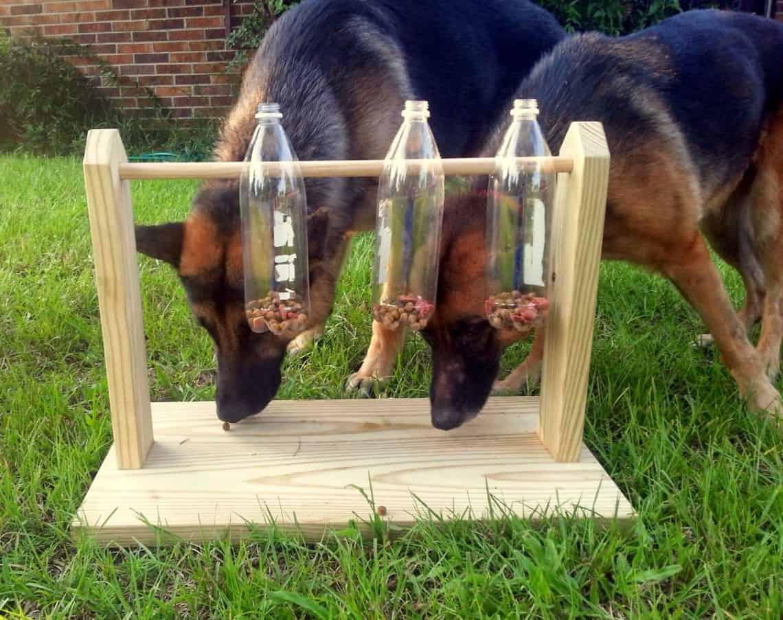 DIY dog bottle toy.