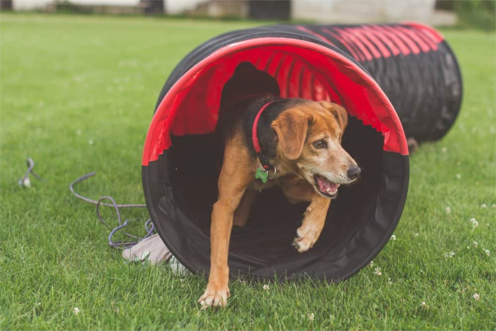 Dog running through a tunnel.
