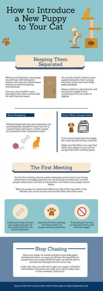 Inforgraphic on how to introduce your new puppy to a cat. From how to keep them separate to the first meeting.