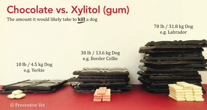 Comparison of toxicity of chocolate versus Xylitol and how much it takes to kill a small-sized or large-sized dog.