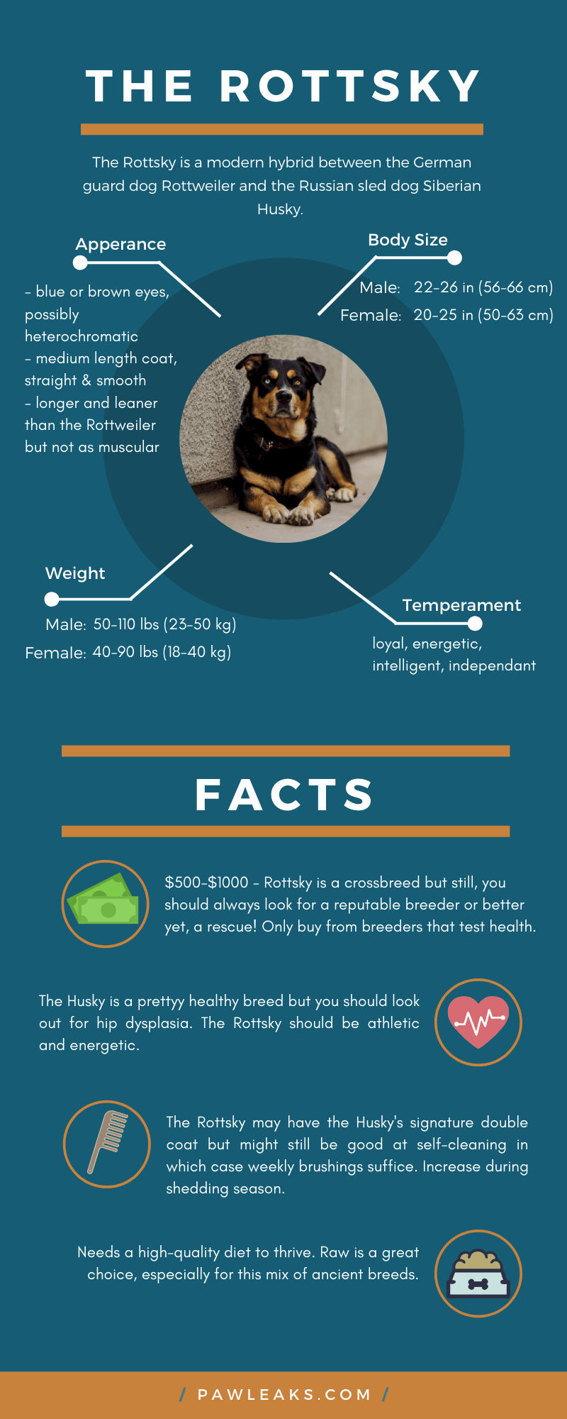 An infographic about the Rottweiler Husky Mix.