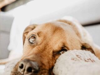 Dog with little hair around eyes