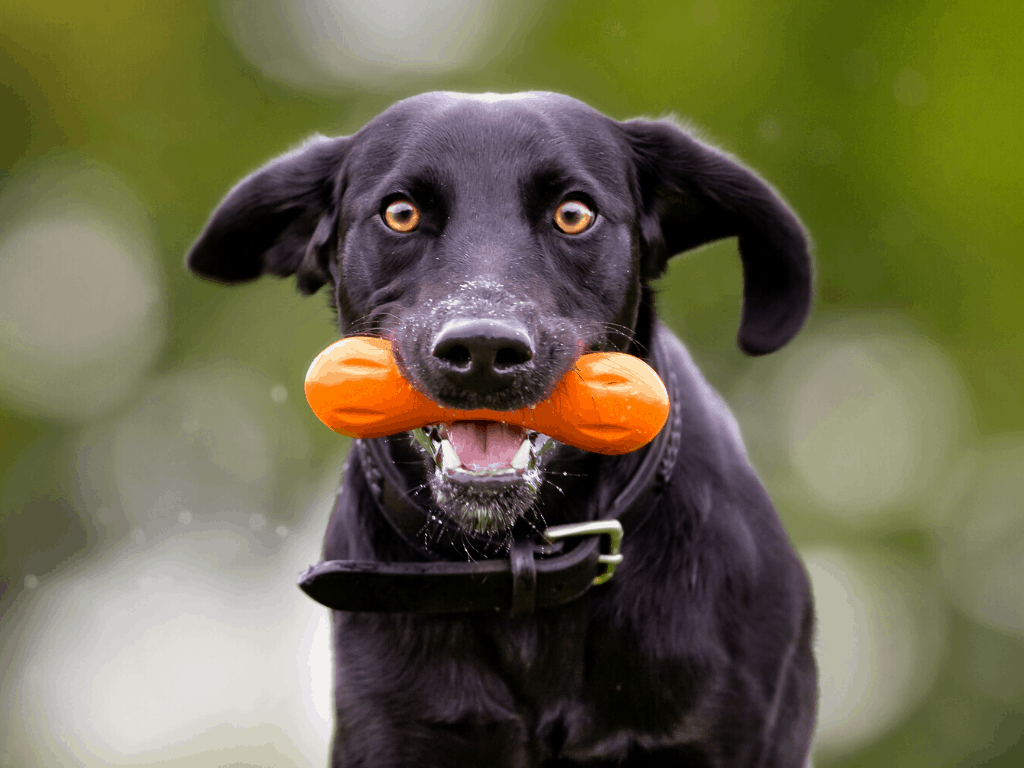 Dog carrying a recyclable and durable dog toy from the brand WestPaws