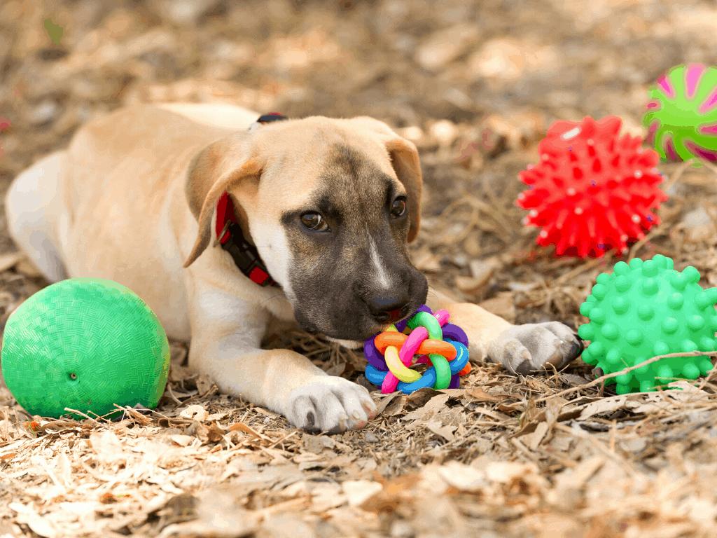 Puppy chews on chew toy