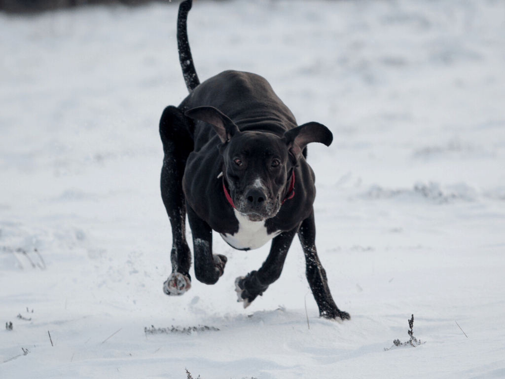 Running dog may have recognised his name.