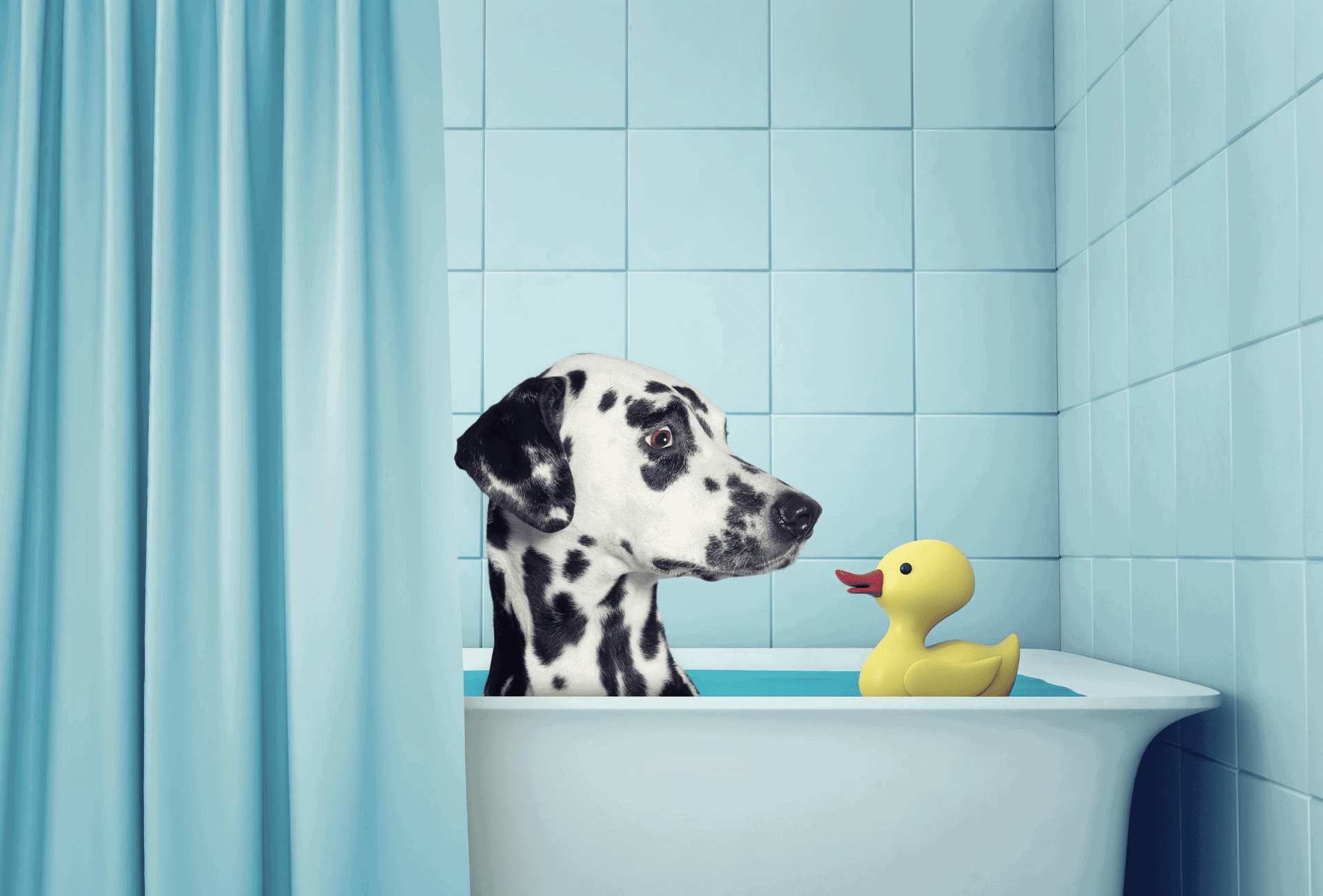 Dalmatian takes a bath to relief itchy skin