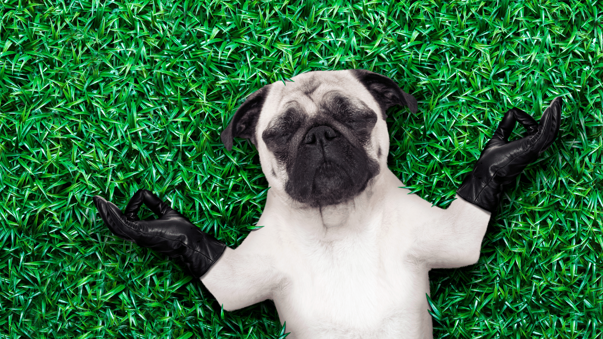 Dog relaxing on the grass in yoga position
