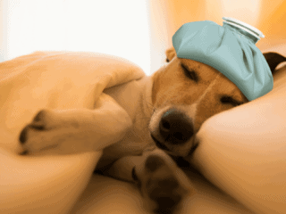 Shows that a dog should rest after vomitting white foam.