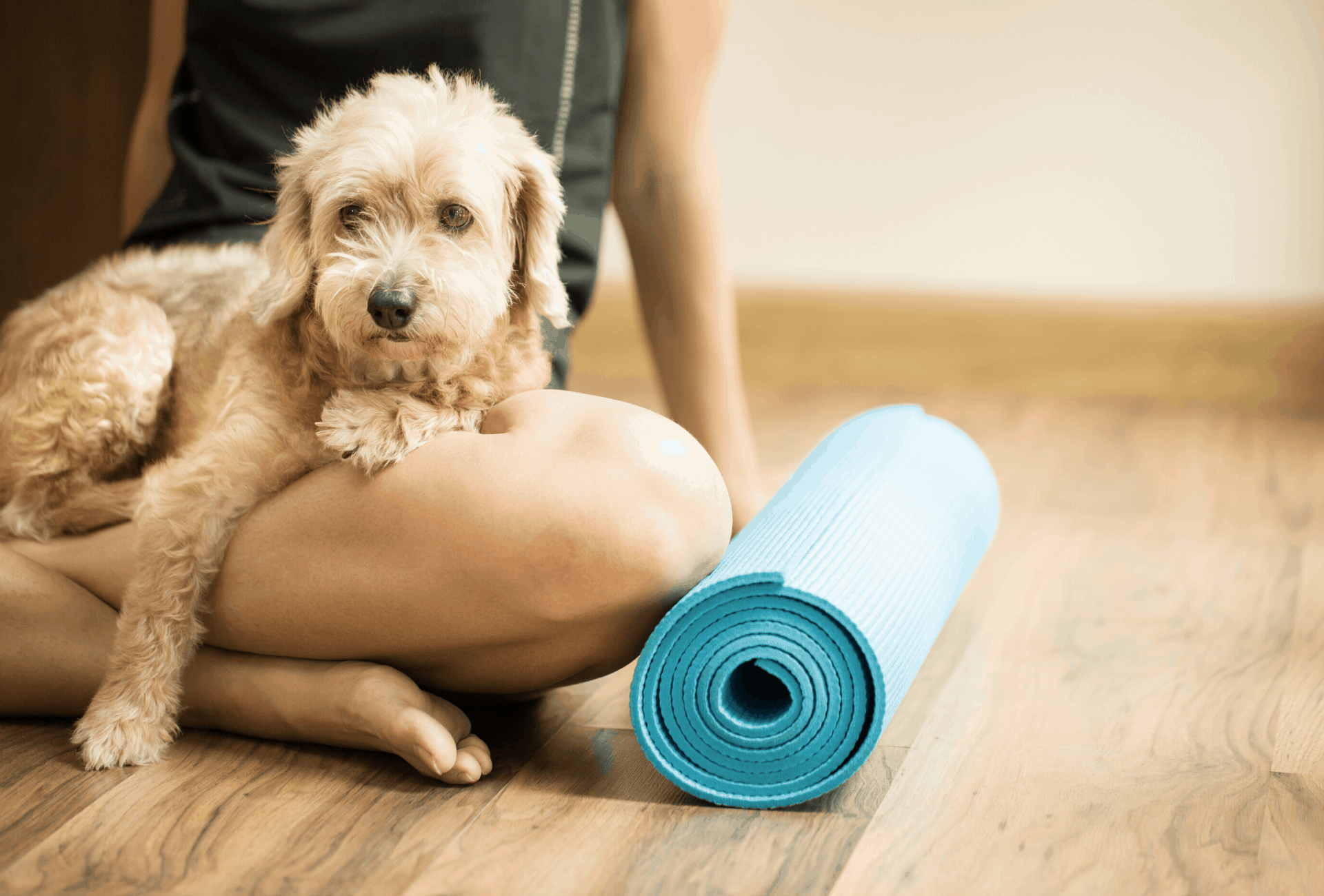 Dog sitting on the lap of his owner during dog yoga class.