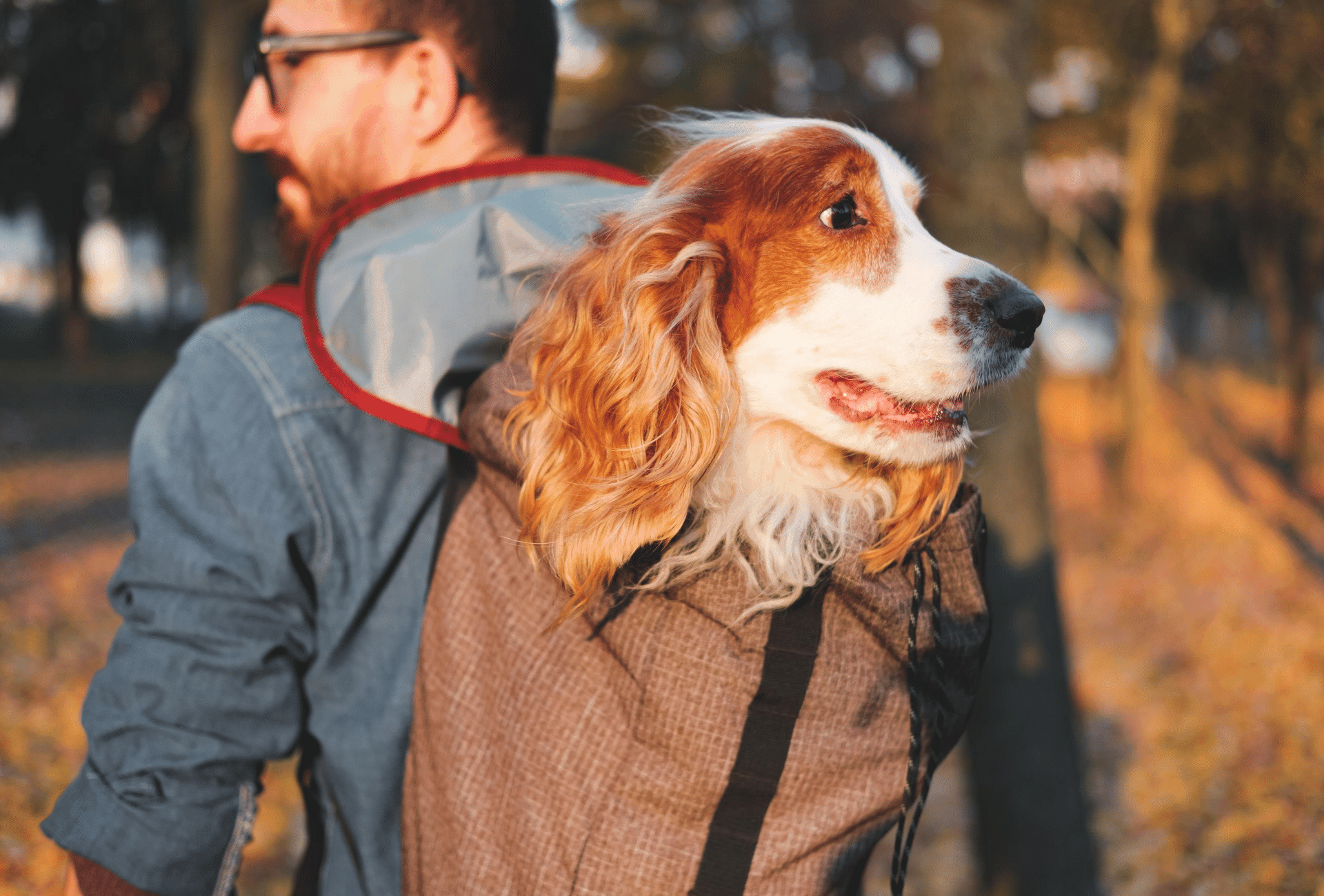 Medium-sized dog in back carrier.