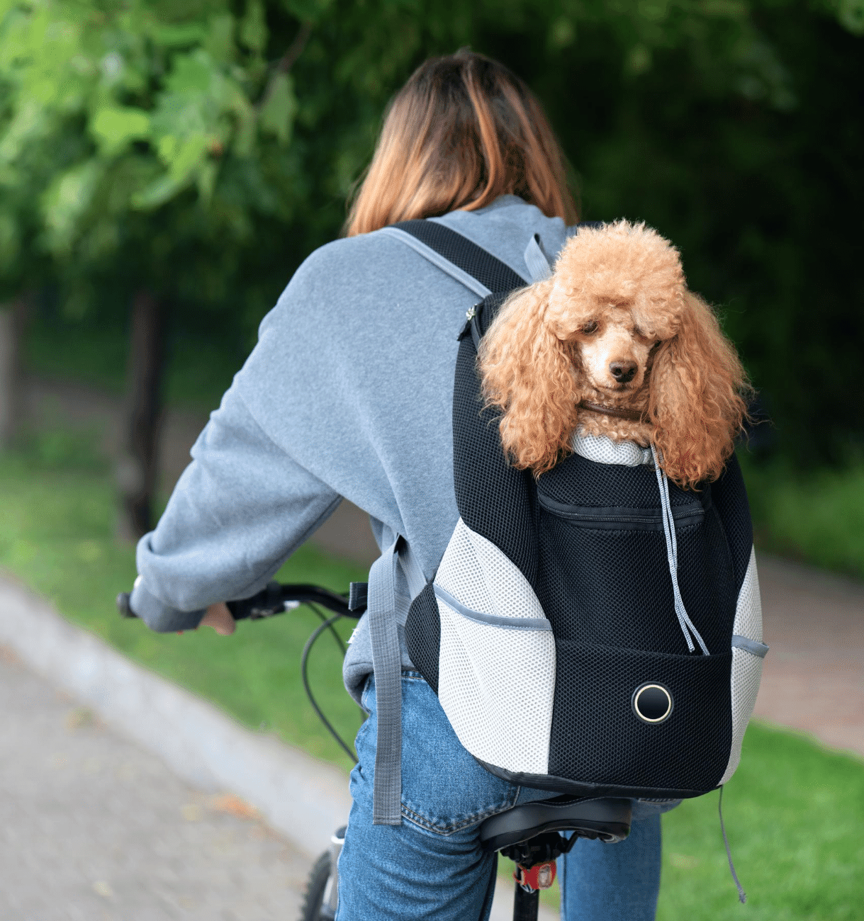 Dog is carried in backpack while travelling by bike.