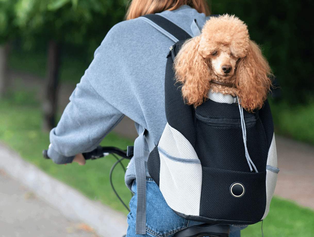 Companet Pet Carrier Backpack Dog Carriers Chest Bag Pet Front Shouder Pack with Breathable Head Out Design and Padded Shoulder for Small Medium Dogs /& Cats Hiking Outdoor Travel