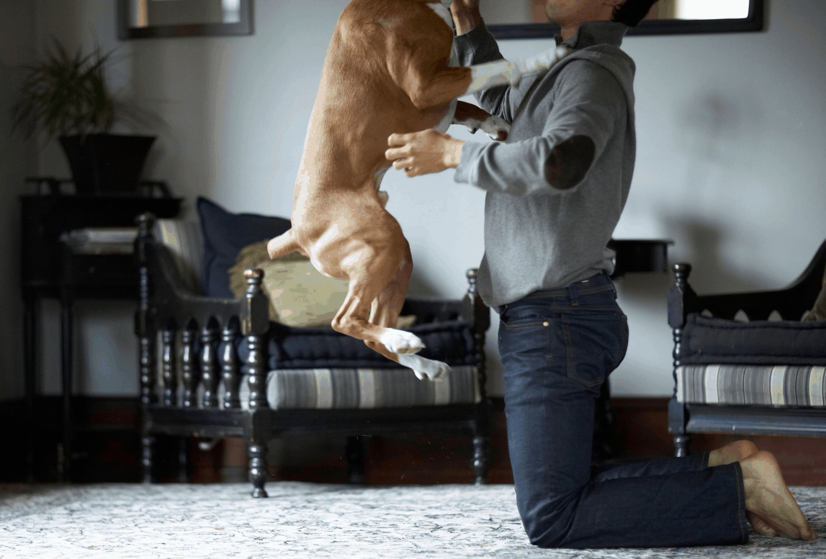 Dog jumping up on person.