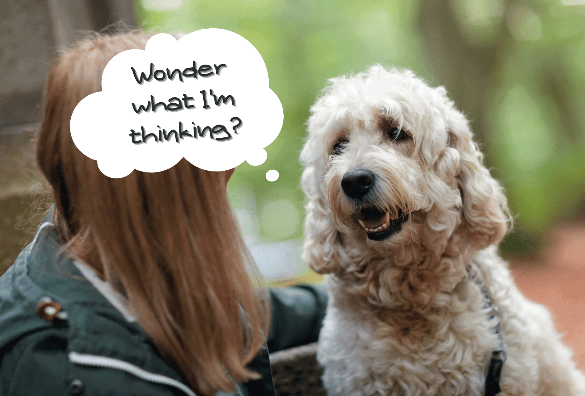 Dog sits in front of owner with speech bubble communicating the dog's thoughts