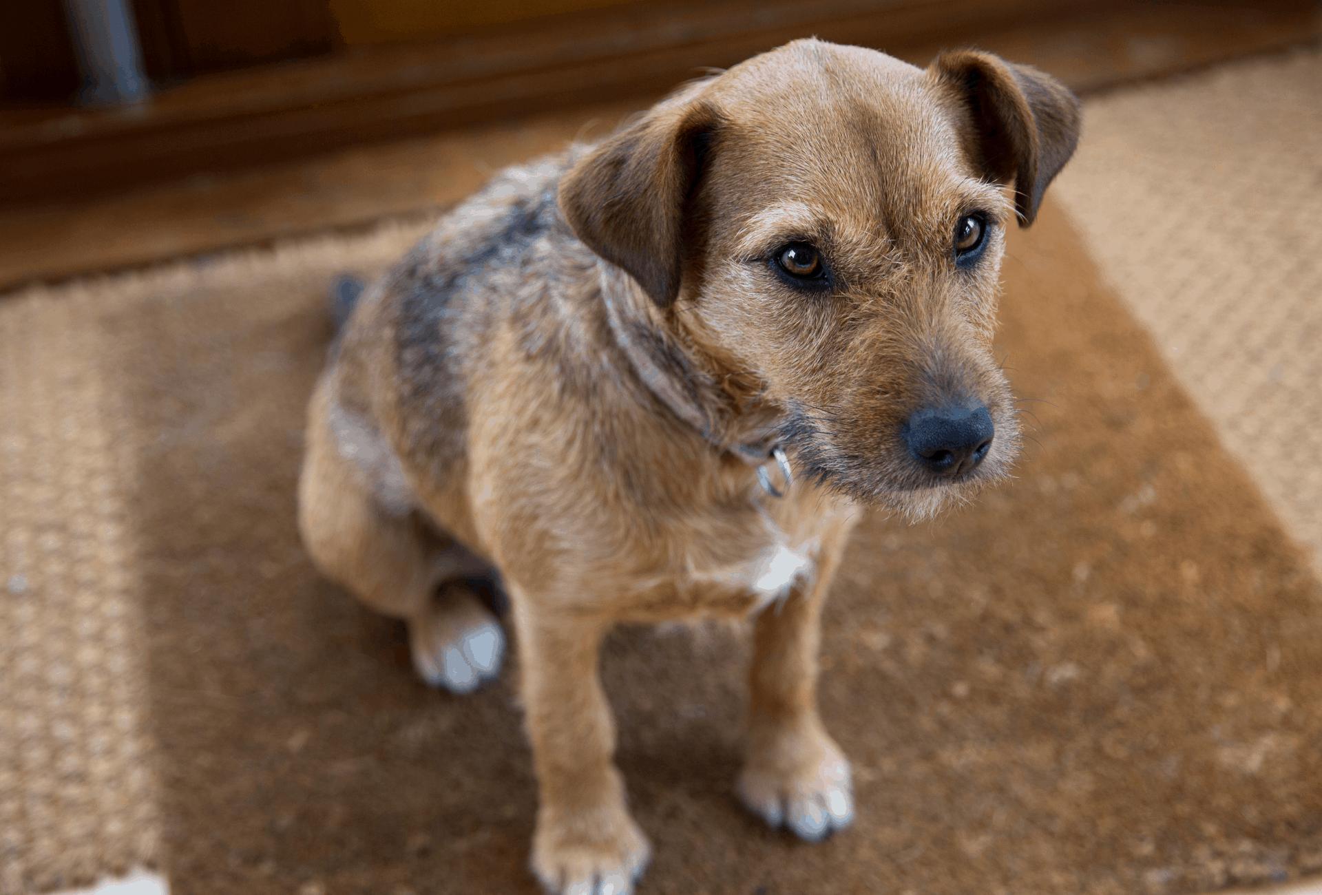 Dog sitting on doormat