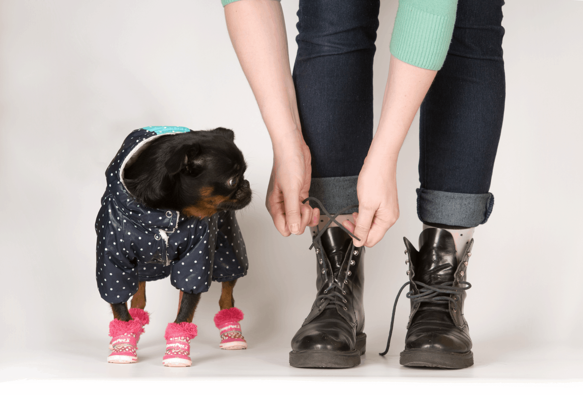 Pug and owner wearing boots