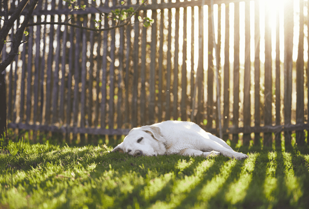 Dog laying in front of fence