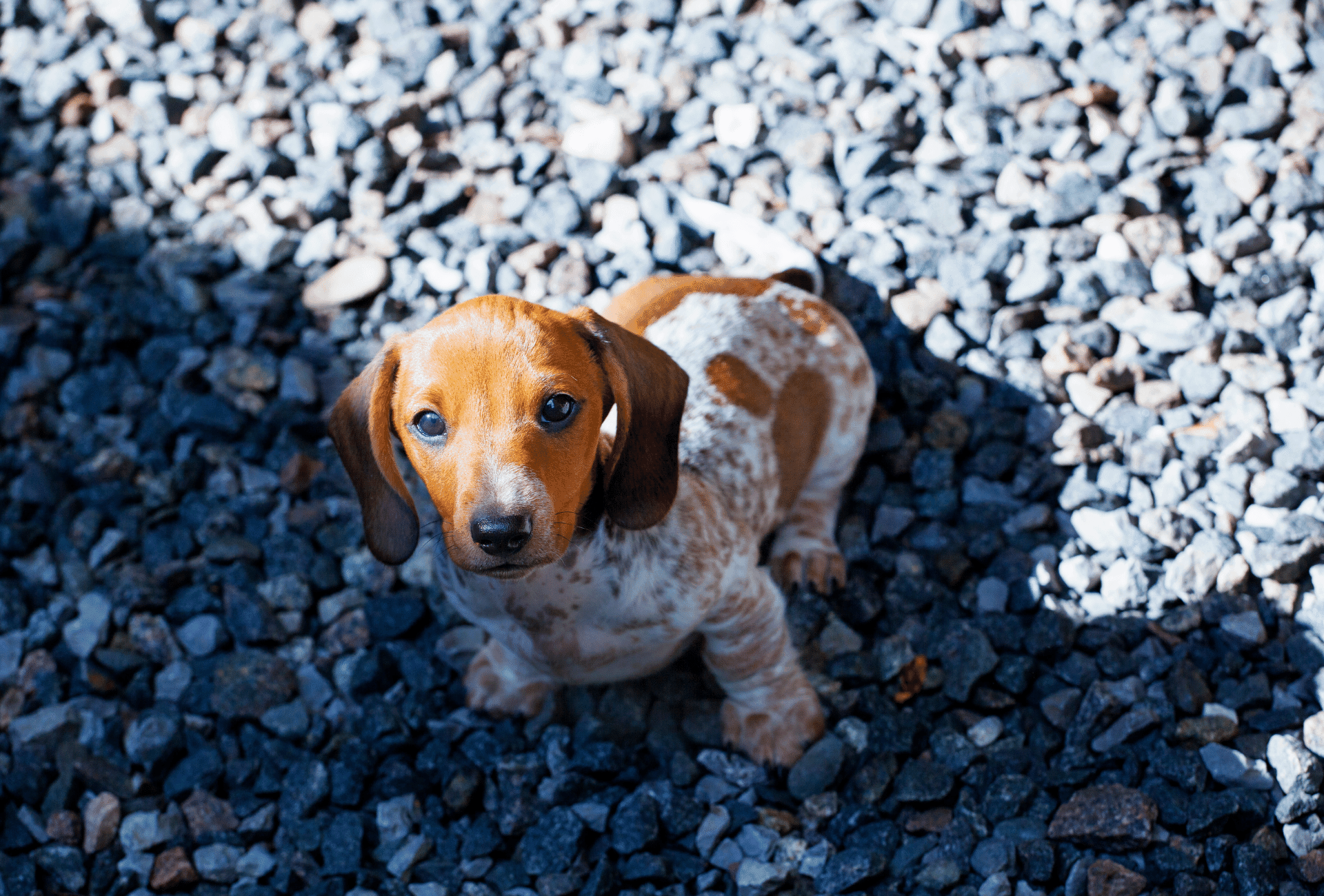 Puppy sitting on top of stones.