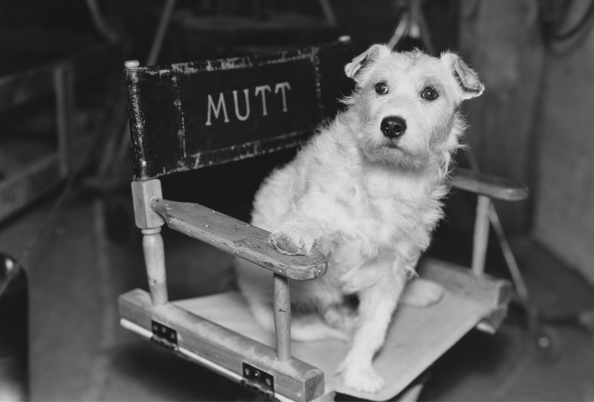 Dog at a movie set