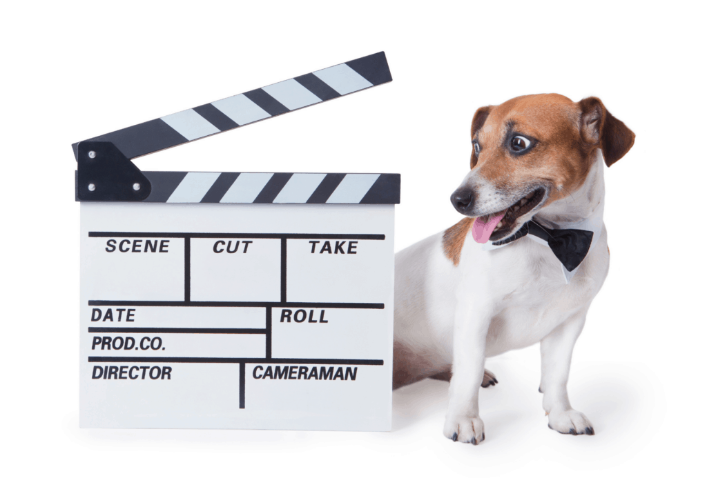 Dog with clapperboard