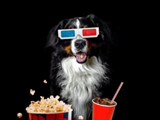dog wearing movie glasses