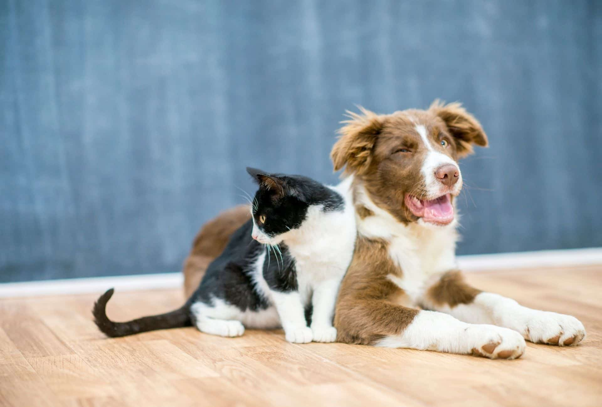 Dog and cat close to each other