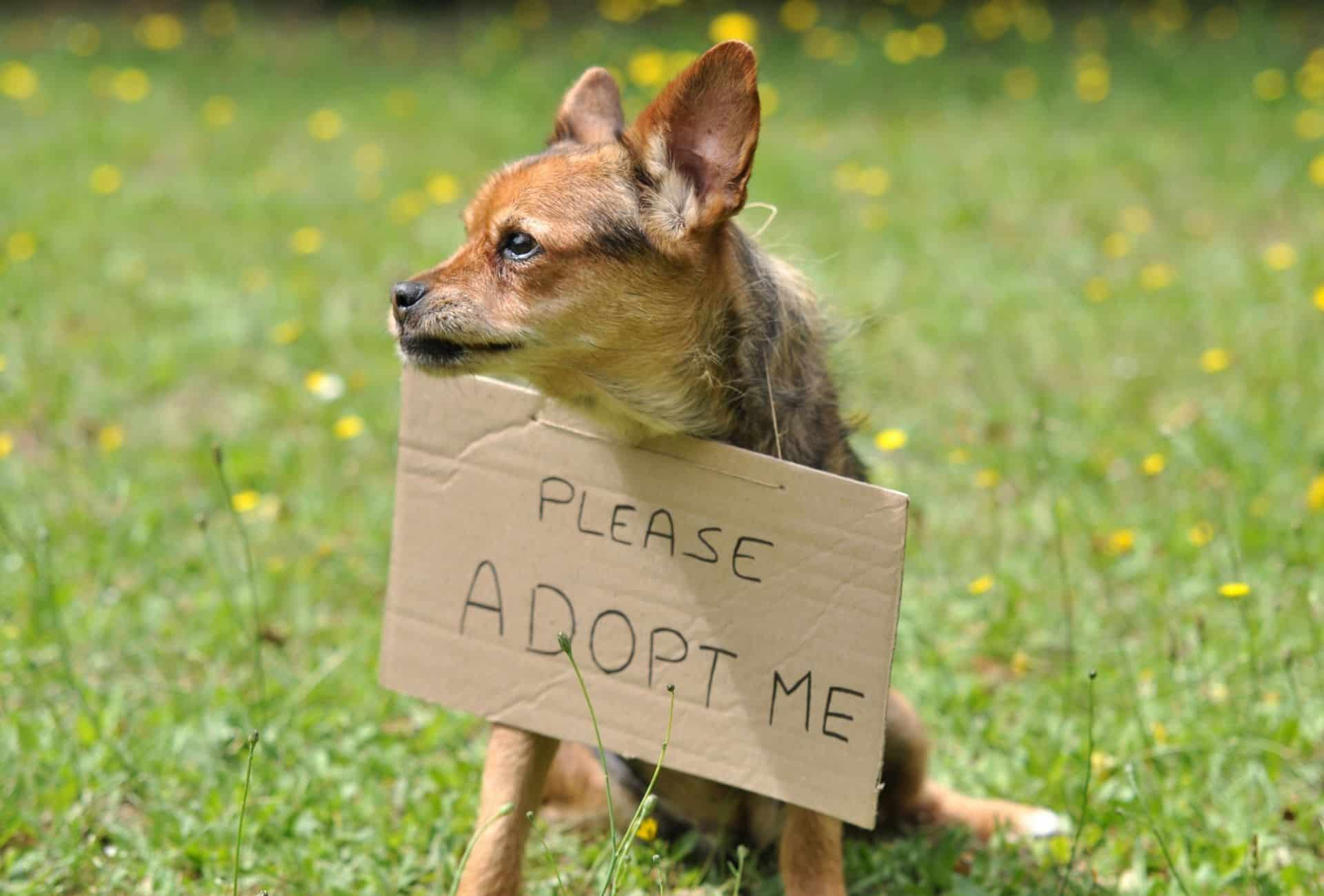 Small dog with an adoption sign