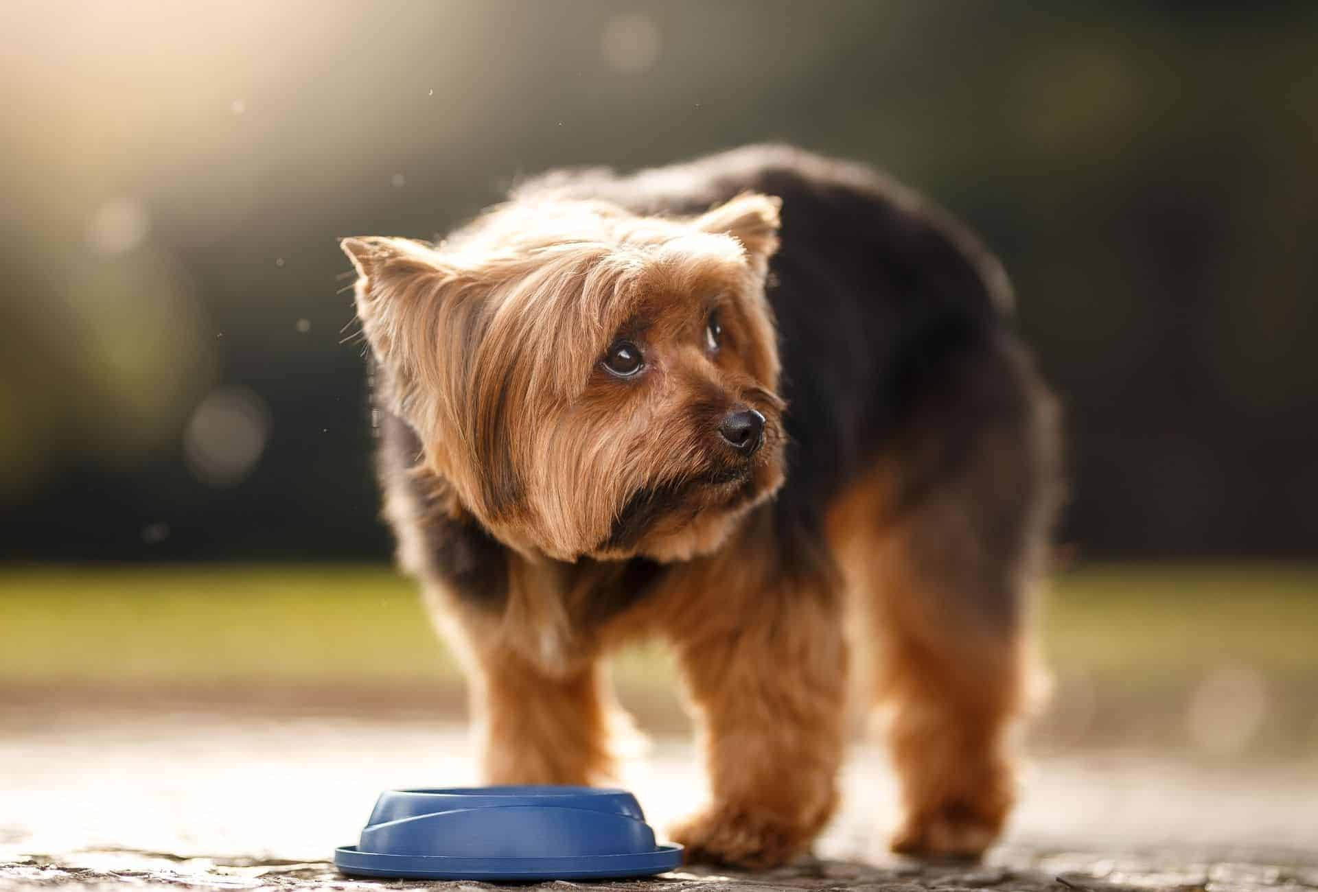 14 Simple Tricks to Get Your Dog to Drink More Water | PawLeaks