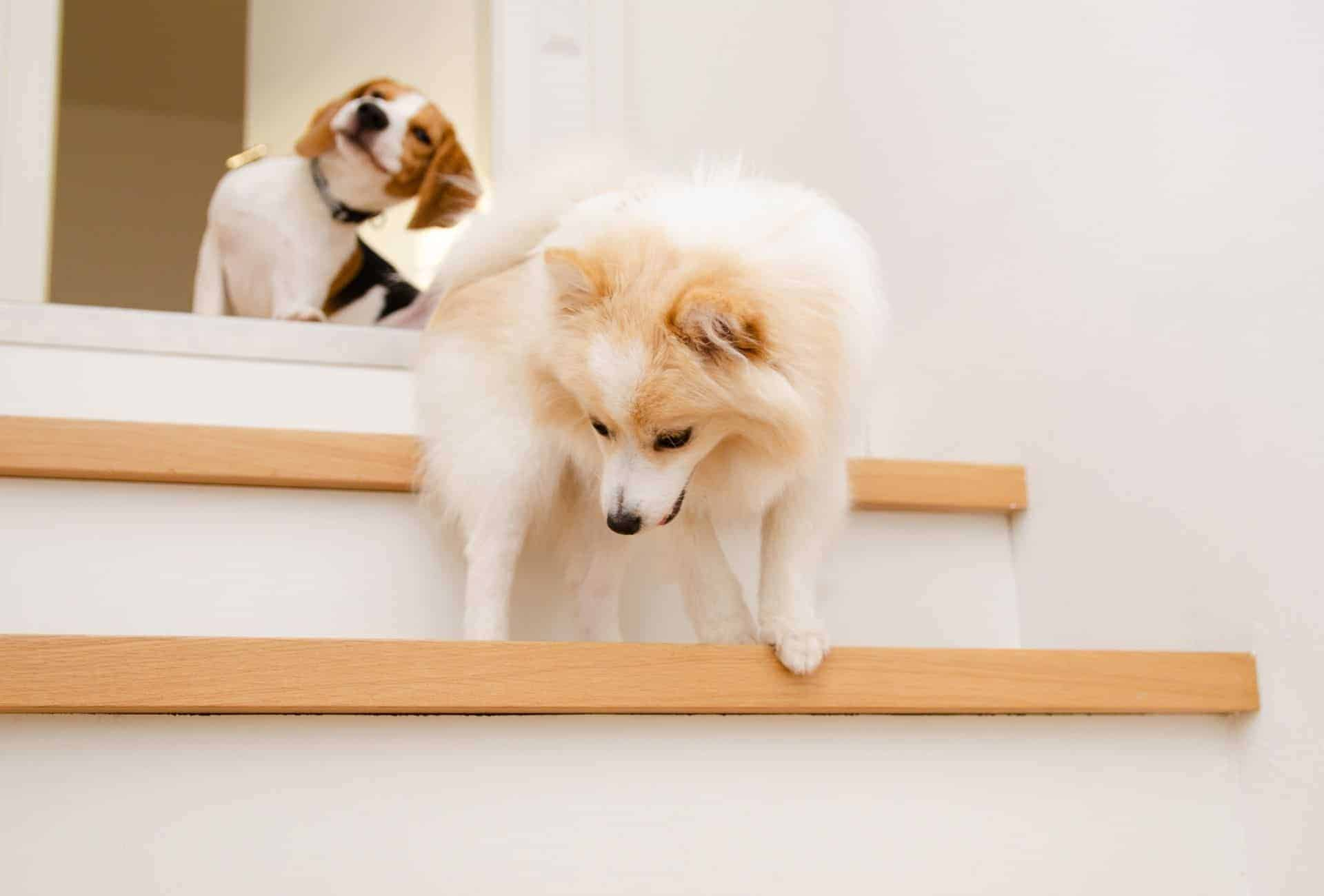 two dogs on a set of stairs
