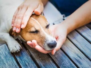 dog head between hands