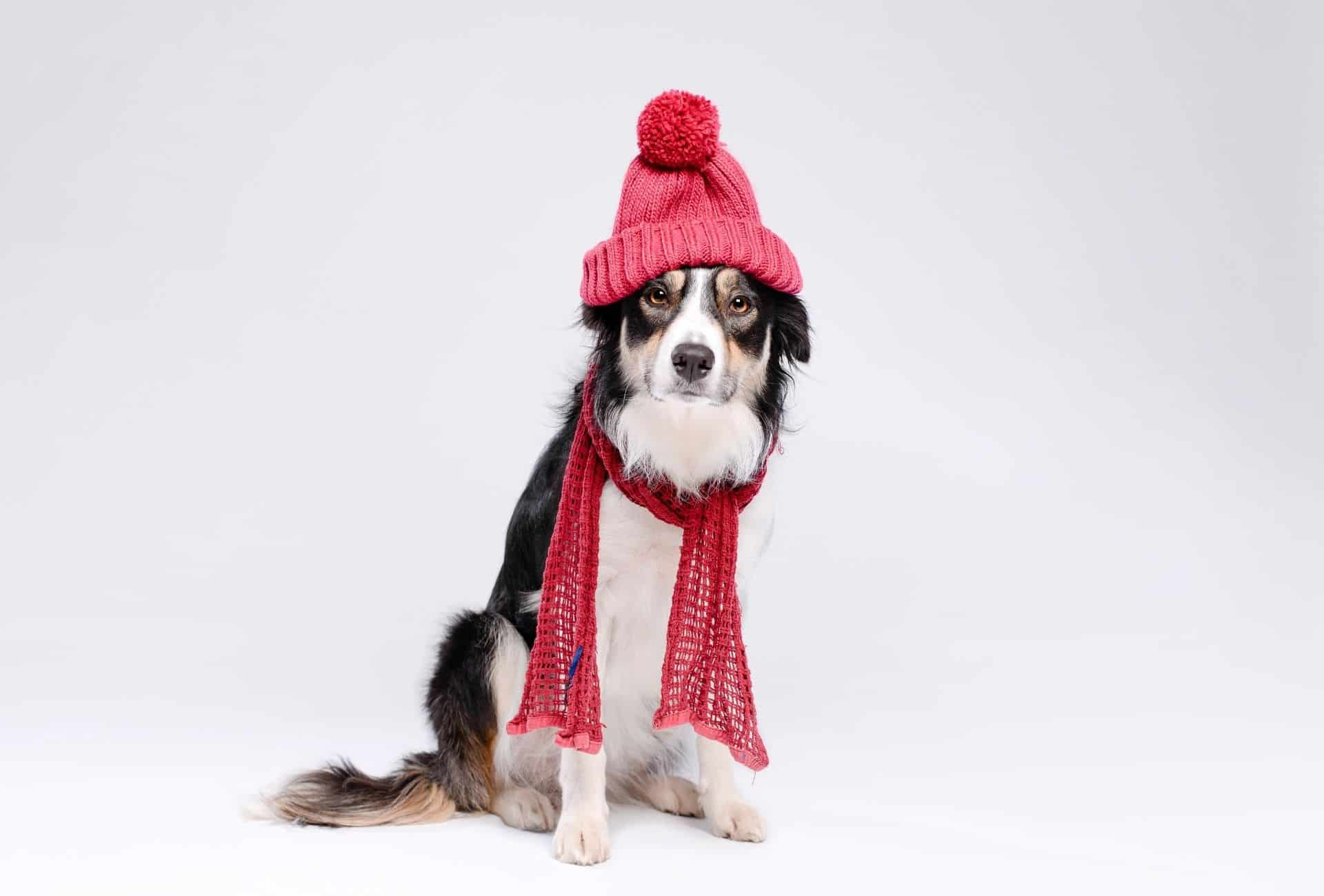 Dog with red scarf and beanie