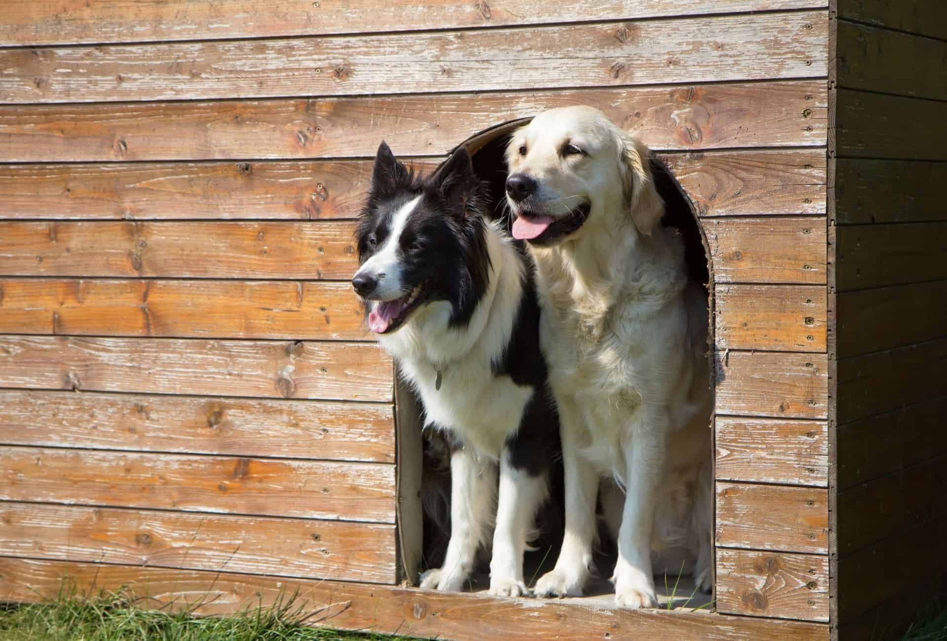 Two dogs in a boarding kennel